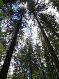 Лес и небо стоковое изображение