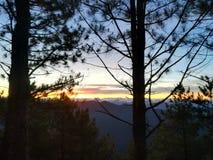 Лес и небо Стоковое Фото