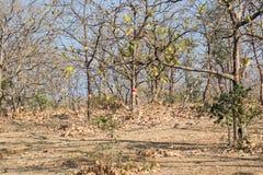Лес и обезлесение стоковые фотографии rf