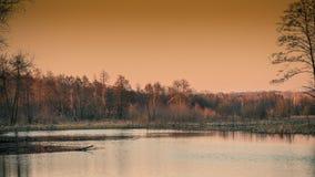 Лес и озеро вечера весны Стоковое Изображение RF