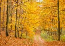 Лес и дорога осени Стоковая Фотография