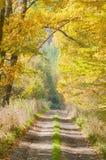 Лес и дорога осени Стоковые Изображения RF