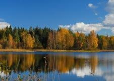 Лес и отражение Стоковая Фотография