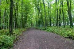 Лес и папоротники в Джэй Cooke стоковые изображения rf