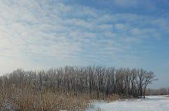 Лес и поле зимы покрытые снегом Стоковые Фото
