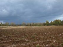 Лес и поле перед трудным дождем на центральной части России стоковые фотографии rf