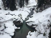 Лес и река снега Стоковая Фотография RF