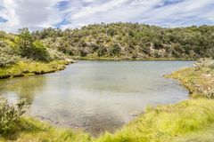 Лес и река Lapataia, национальный парк Огненной Земли Стоковые Изображения