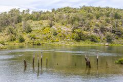 Лес и река Lapataia, национальный парк Огненной Земли Стоковое Изображение RF