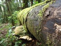 Лес и свое вечно-обильное разнообразие видов Стоковое Изображение