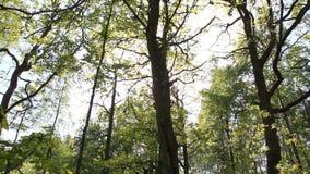 Лес и солнце сток-видео