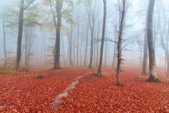 Лес и след сказки туманные через листья Стоковое Изображение RF