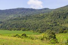 Лес и ферма стоковая фотография rf