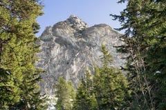 Лес и холм в высоком Tatras, Словакии Стоковое Фото