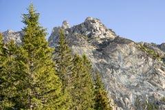 Лес и холм в высоком Tatras, Словакии Стоковое Изображение