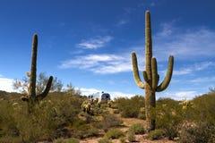 Лес кактуса Saguaro и место для лагеря RV Airstream стоковая фотография rf