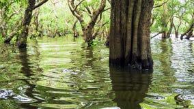 Лес Камбоджа мангровы Looded Стоковое Фото