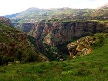 Лес кедра в Ливане Стоковое Фото