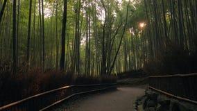 Лес Киото бамбуковый сток-видео