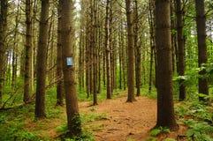 Лес Коннектикут положения Topsmead стоковое изображение