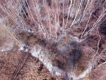 Лес конца зимы и flod воды с льдом, воздушным Стоковые Фото