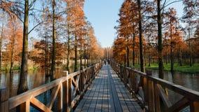 Лес красного цвета воды Стоковая Фотография