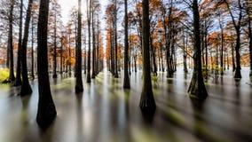 Лес красного цвета воды