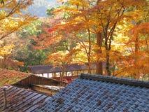 Лес клена в Киото, Японии стоковая фотография
