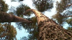 Лес лета на солнечный день сток-видео