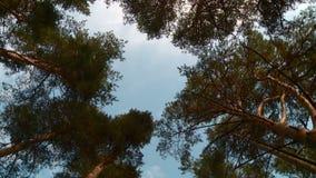 Лес лета на солнечный день видеоматериал