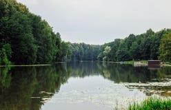 Лес лета около пруда Стоковое Изображение RF