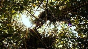 Лес, летний день Свет солнца делает свой путь через толстую листву деревьев сток-видео