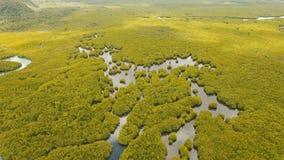 Лес мангровы в Азии Остров Филиппин Siargao сток-видео