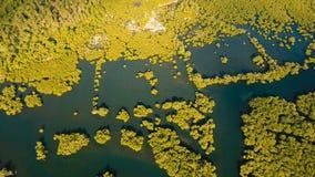Лес мангровы в Азии Остров Филиппин Siargao видеоматериал