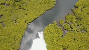 Лес мангровы в Азии видеоматериал