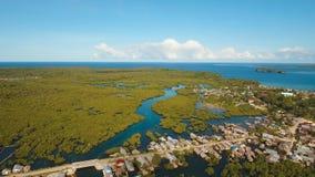 Лес мангровы в Азии акции видеоматериалы