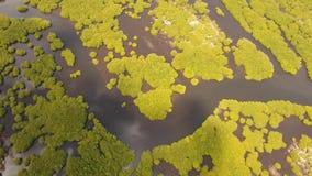 Лес мангровы в Азии сток-видео