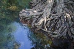 Лес мангровы в изумрудном болоте Стоковое Фото