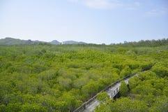 Лес мангровы в Hua Hin, Таиланде Стоковое Фото
