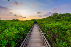 Лес мангровы заходом солнца Стоковые Изображения