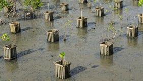 Лес мангровы младенца стоковые фотографии rf