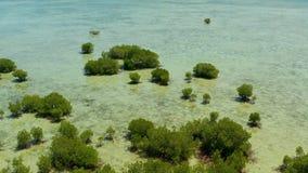 Лес мангровы на коралловом рифе Филиппинах, Palawan акции видеоматериалы