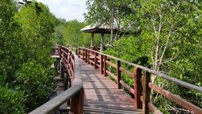 Лес мангровы Пхукета Стоковое Изображение