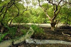 Лес мангровы Стоковое Изображение
