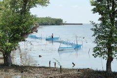 Лес 1 мангровы Стоковая Фотография RF