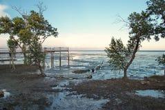 Лес 1 мангровы Стоковое фото RF