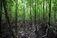 Лес мангровы Стоковое Изображение RF