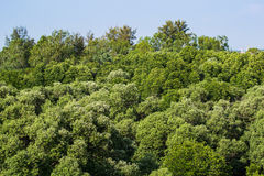 Лес мангровы Стоковые Изображения RF