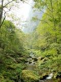 Лес меньшая речная вода бежать до конца Стоковое Изображение RF