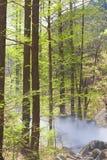 Лес метасеквойи и земная жара Стоковые Изображения